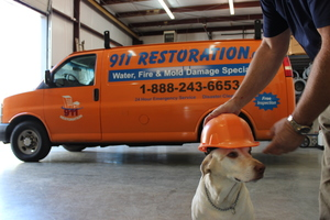 Mold removal and inspection van